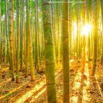 Bambu, Manfaat Dan Karakter