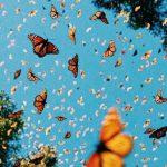Waah.. Jakarta sekarang ada kupu-kupu